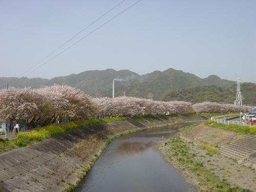 丸子川の春(静岡市)